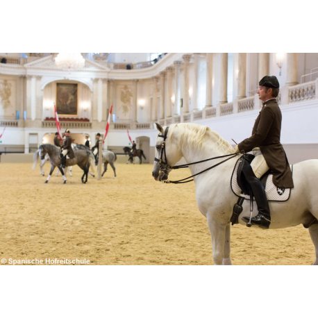 Combined Ticket: Spanish Riding School Morning exercise & Imperial Treasury Vienna: 2017