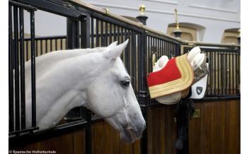 Ticket Plus: La Scuola d'Equitazione Spagnola, Esercizio Mattutino e Tour Guidato,Vienna: Tutto l'Anno