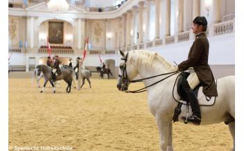 Утренний выезд, Испанская школа верховой езды, Вена: 2017