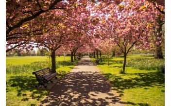 Гайд-парк (Hyde park), Лондон