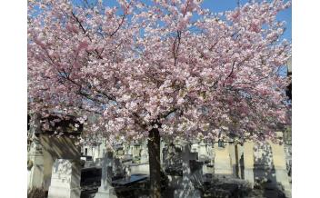 Кладбище Монпарнас, Париж – круглый год