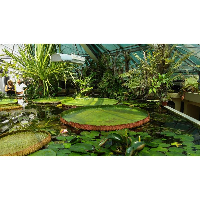 jardin des plantes botanical gardens paris. Black Bedroom Furniture Sets. Home Design Ideas
