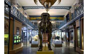 自然歷史博物館, 巴黎, 法国, 全年