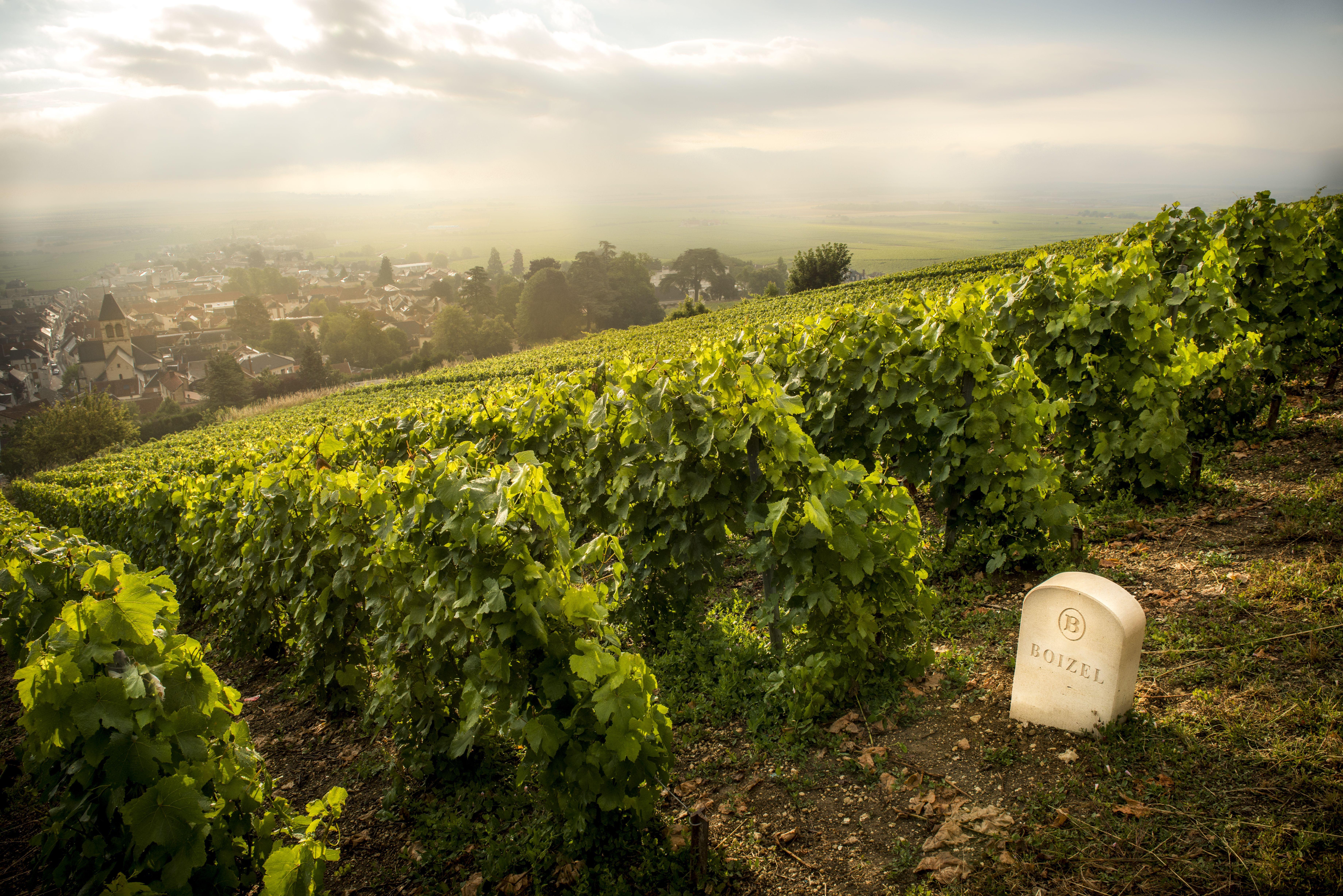 Champagne Boizel, Epernay, France © Alexia Clair