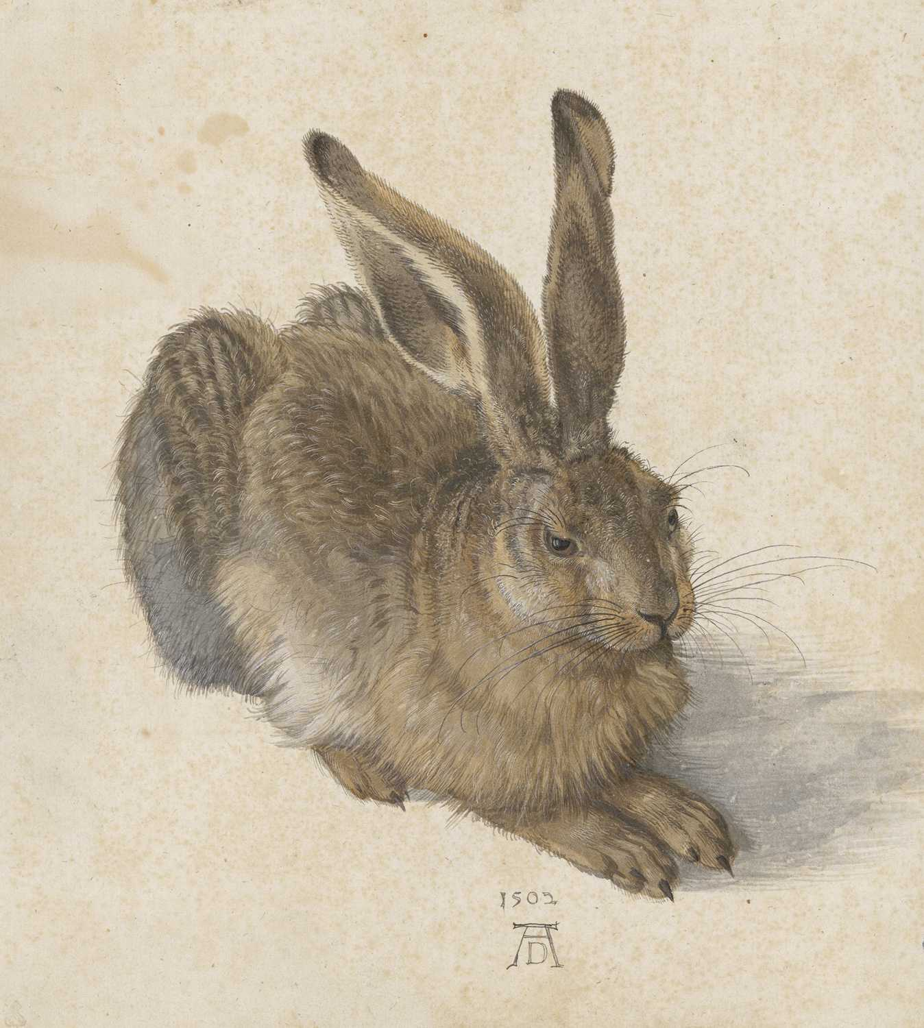 Albrecht Dürer Hare, 1502 Watercolor and gouache, brush, heightened with white gouache © The Albertina Museum, Vienna