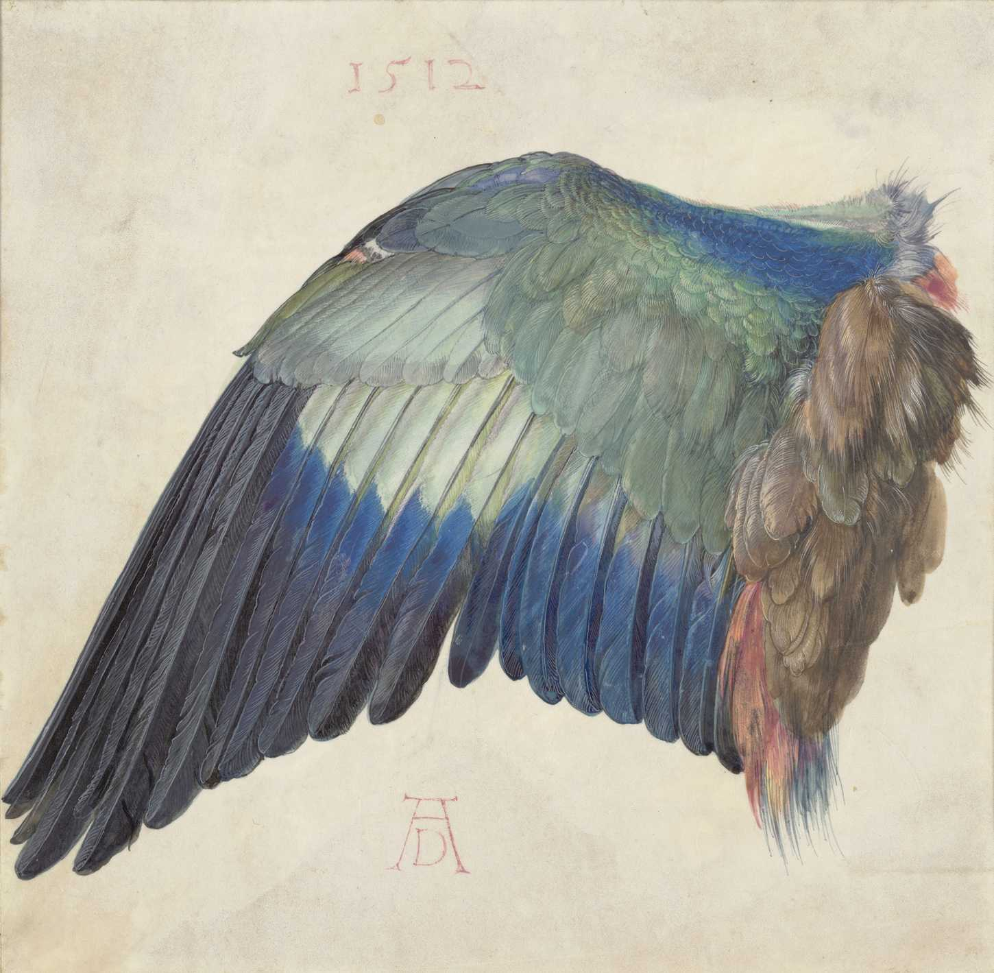 Albrecht Dürer Wing of a Blue Roller, ca. 1500 (or 1512) Watercolor and body color, heightened with white body color, on vellum © The Albertina Museum, Vienna