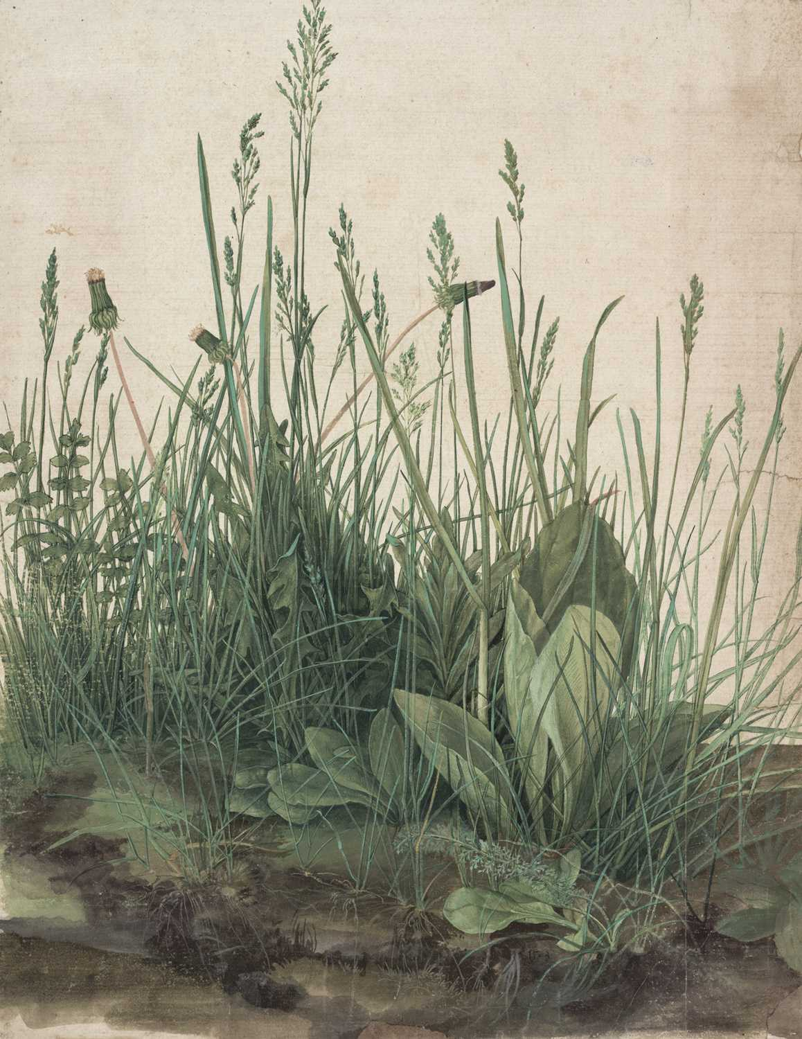 Albrecht Dürer The Large Piece of Turf, 1503 Watercolor and body color, heightened with white body color © The Albertina Museum, Wien