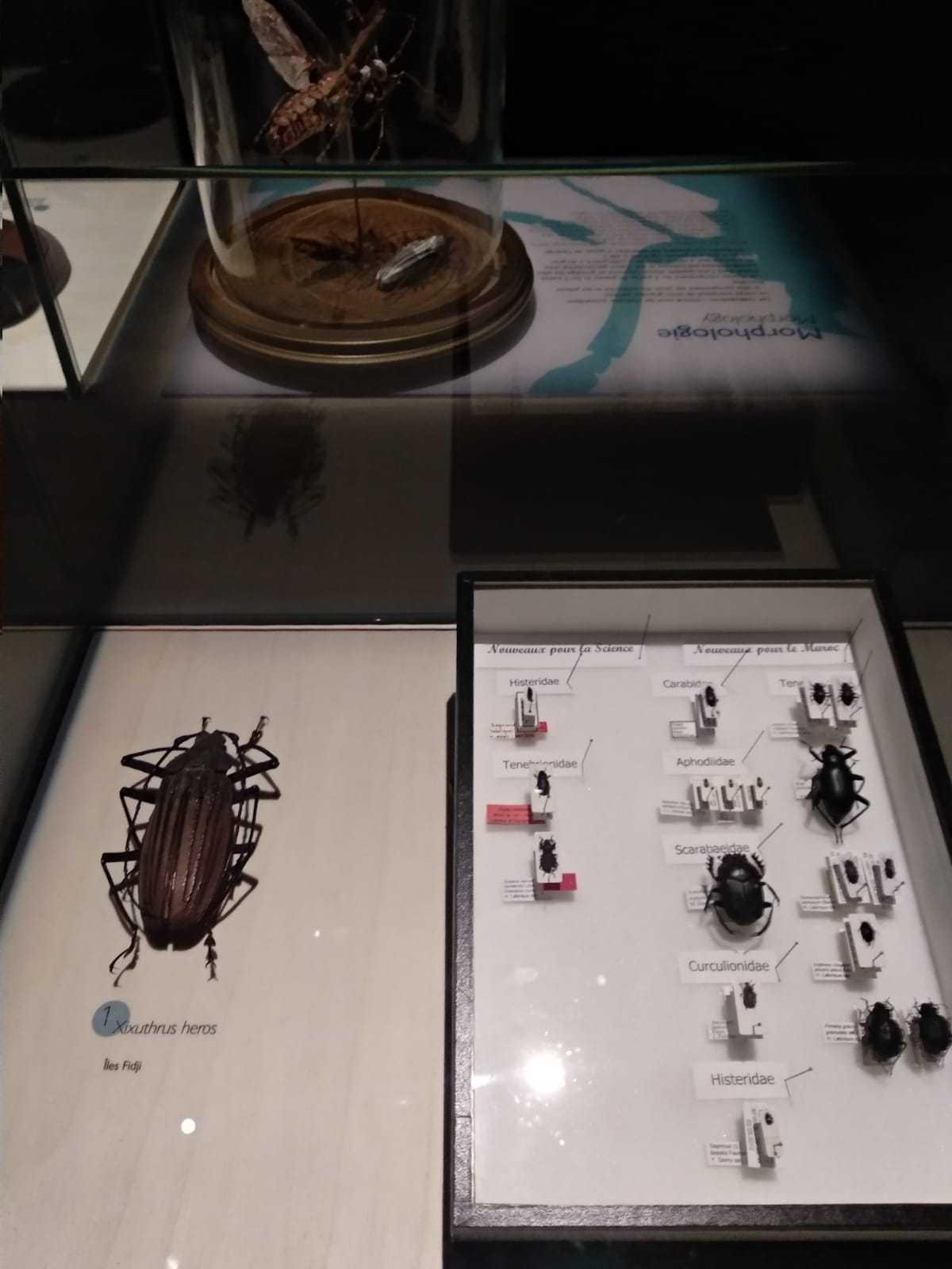 Exhibition, Coléoptères, insectes extraordinaires, Musée des Confluences, Lyon: 21 December 2018-28 June 2020