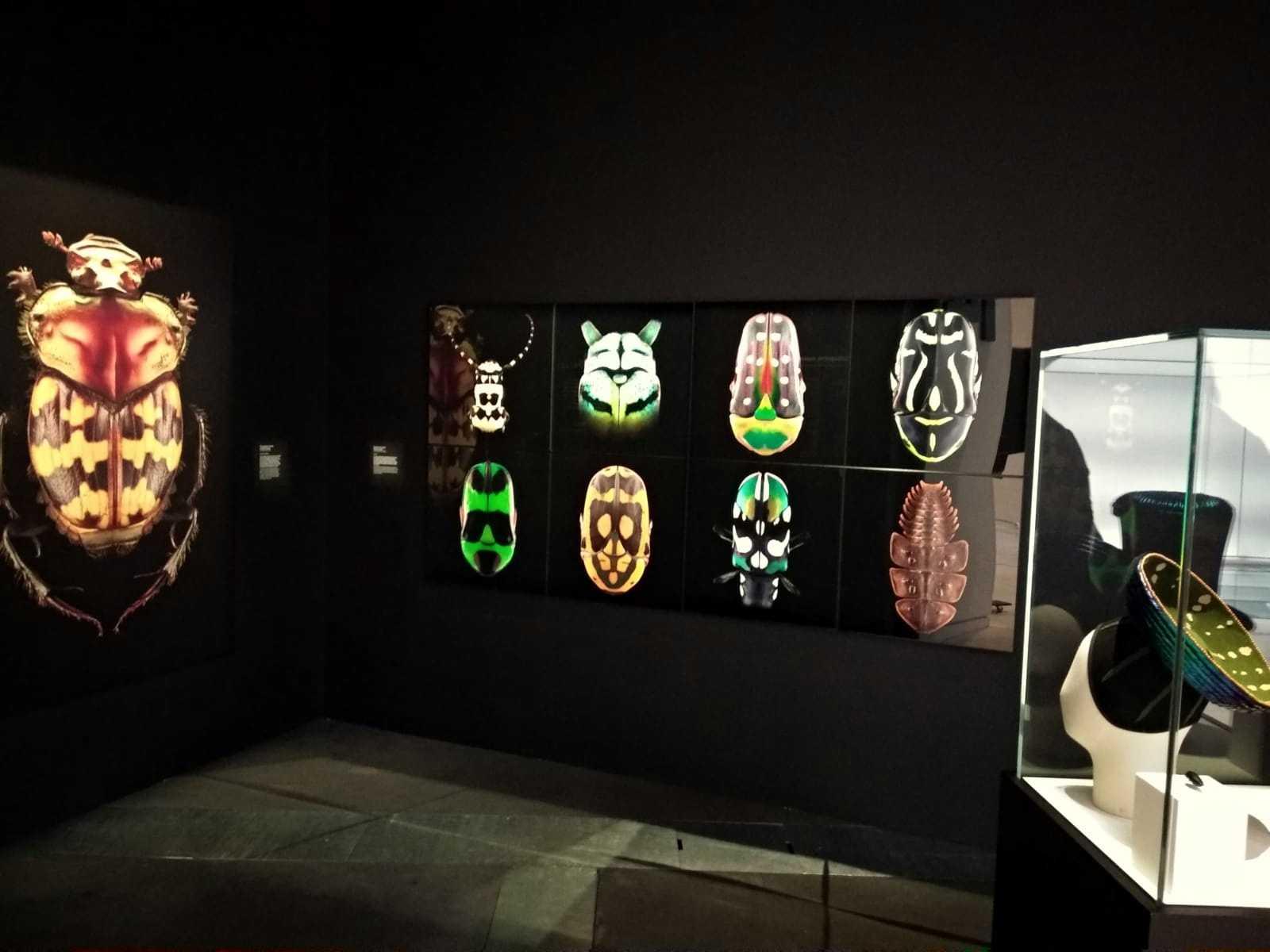 Coléoptères, insectes extraordinaires, Musée des Confluences, Lyon: 21 December 2018-28 June 2020