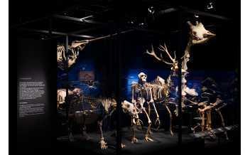 Exposition « Traces du vivant » au musée des Confluences, structure des vertèbres cervicales Photo musée des Confluences – Bertrand Stofleth