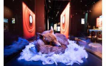 Exposition « L'univers à l'envers, Plonk et Replonk® » au musée des Confluences © Bébert - Plonk & Replonk ®