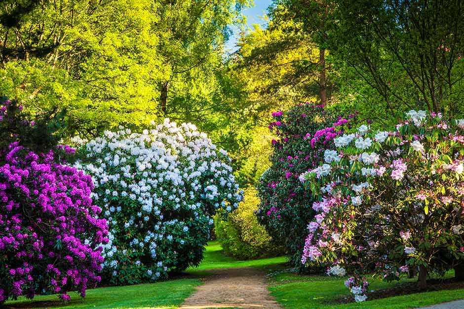 Bowood Woodland Gardens, Calne