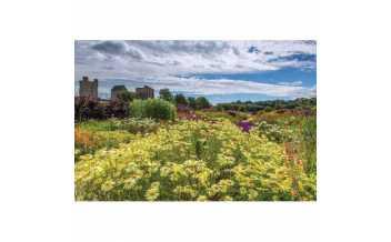 Helmsley Walled Garden, Helmsley